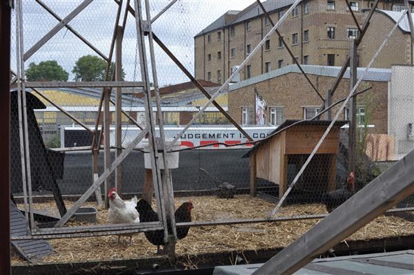 Although it many not look like much, this is an urban farm with chicken on the roof. Not exactly how one would imagine a free-range bird to grow up though.